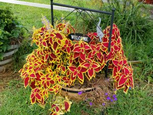 Red-Yellow Plant